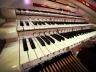 organ-228